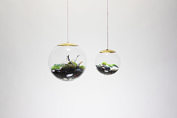 GLOBE, hand-blown glass terrarium