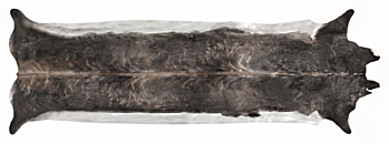 Super long Stretched Cowhide Rug